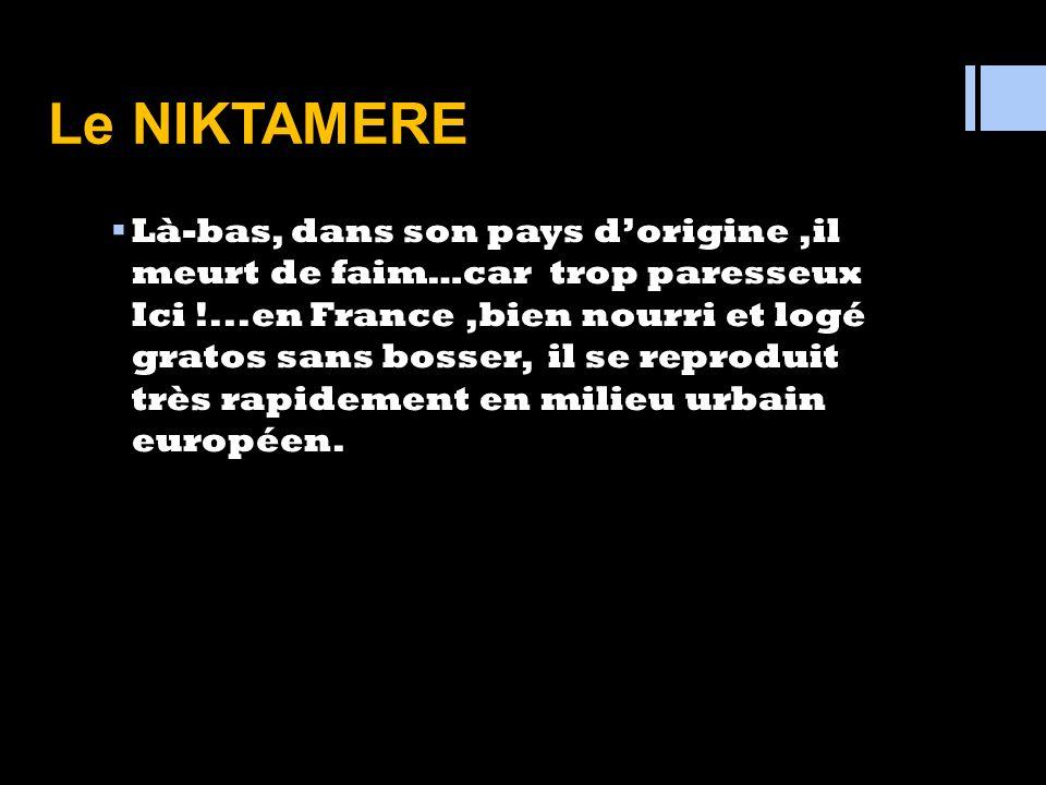« PRESENTATION » Le NIKTAMERE est un animal en voie de disparition …pardon dans son pays pas de fausses joie..seulement,dans son pays d'origine, …. le