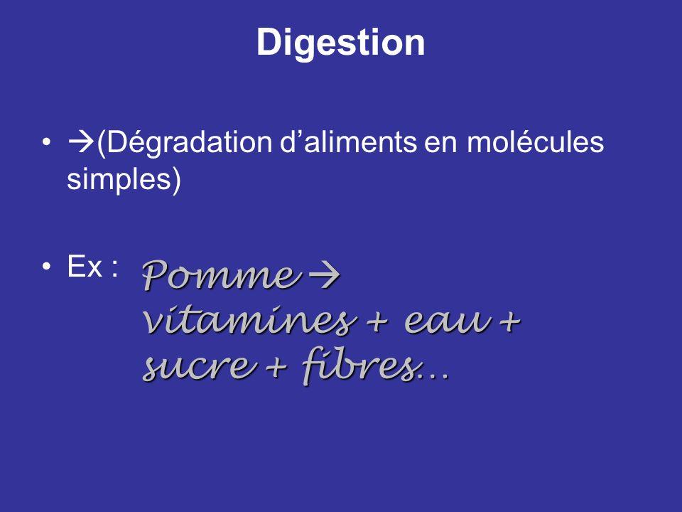 Digestion (Dégradation daliments en molécules simples) Ex : Pomme vitamines + eau + sucre + fibres…