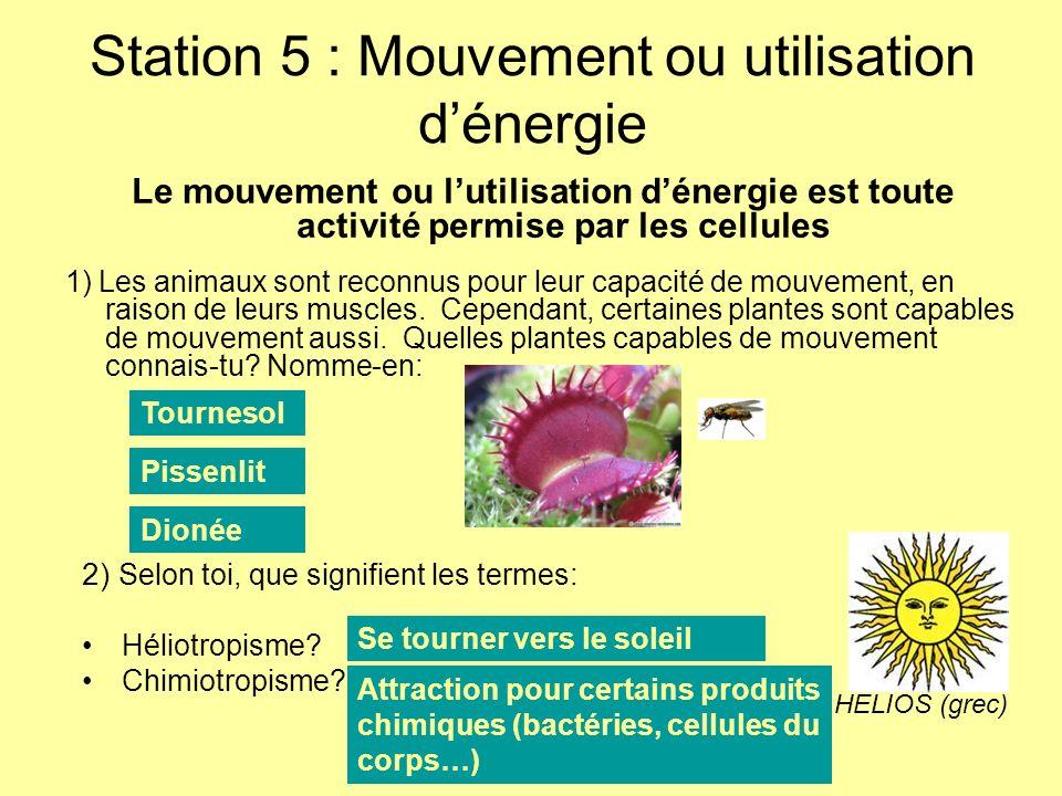 Station 5 : Mouvement ou utilisation dénergie 1) Les animaux sont reconnus pour leur capacité de mouvement, en raison de leurs muscles. Cependant, cer