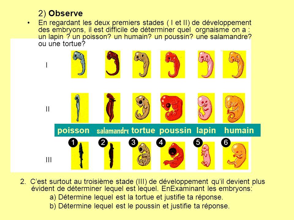 2) Observe En regardant les deux premiers stades ( I et II) de développement des embryons, il est difficile de déterminer quel orgnaisme on a : un lap