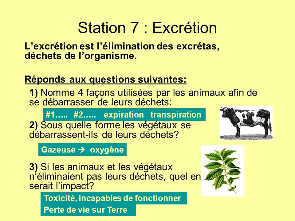 Station 7 : Excrétion Lexcrétion est lélimination des excrétas, déchets de lorganisme. Réponds aux questions suivantes: 1) Nomme 4 façons utilisées pa