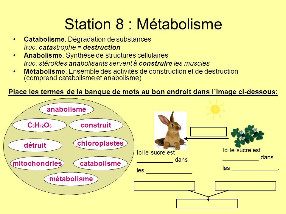 Station 8 : Métabolisme Catabolisme: Dégradation de substances truc: catastrophe = destruction Anabolisme: Synthèse de structures cellulaires truc: st