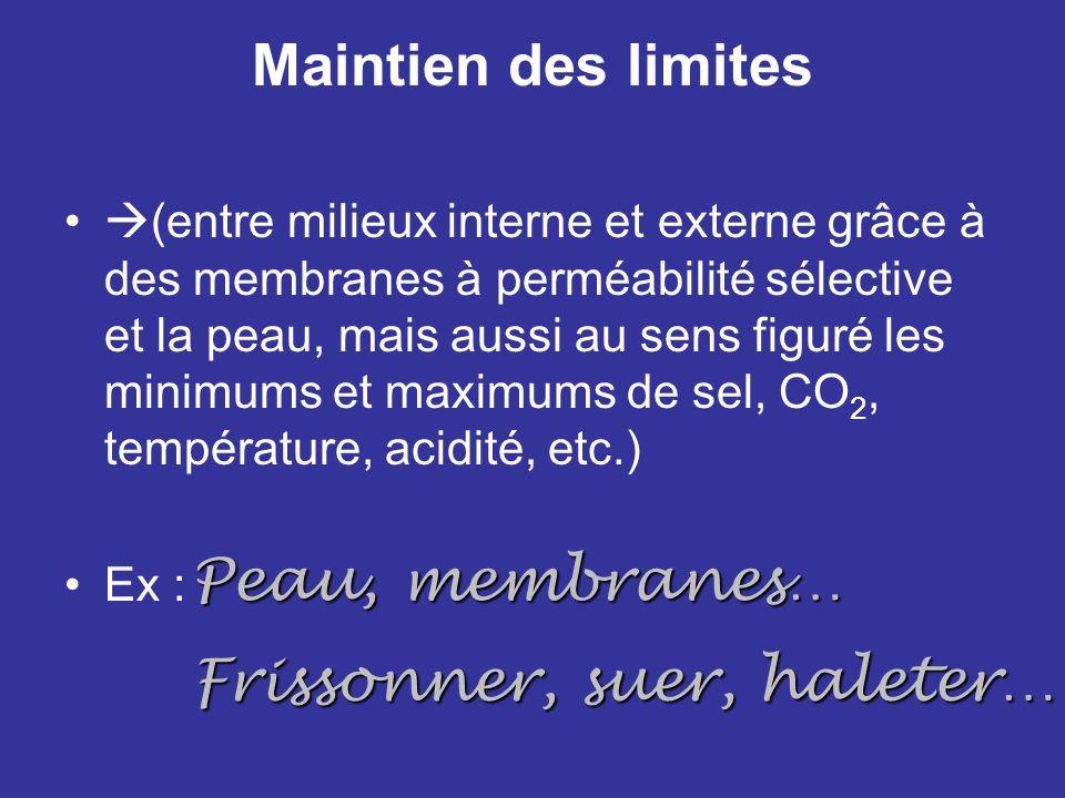 Maintien des limites (entre milieux interne et externe grâce à des membranes à perméabilité sélective et la peau, mais aussi au sens figuré les minimu