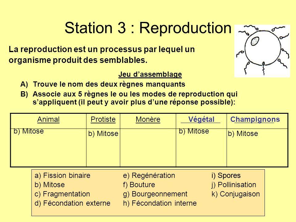 Station 3 : Reproduction La reproduction est un processus par lequel un organisme produit des semblables. Jeu dassemblage A)Trouve le nom des deux règ