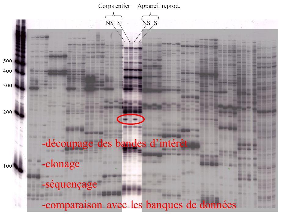 NS S Corps entierAppareil reprod. 100 200 300 400 500 -découpage des bandes dintérêt -clonage -séquençage -comparaison avec les banques de données