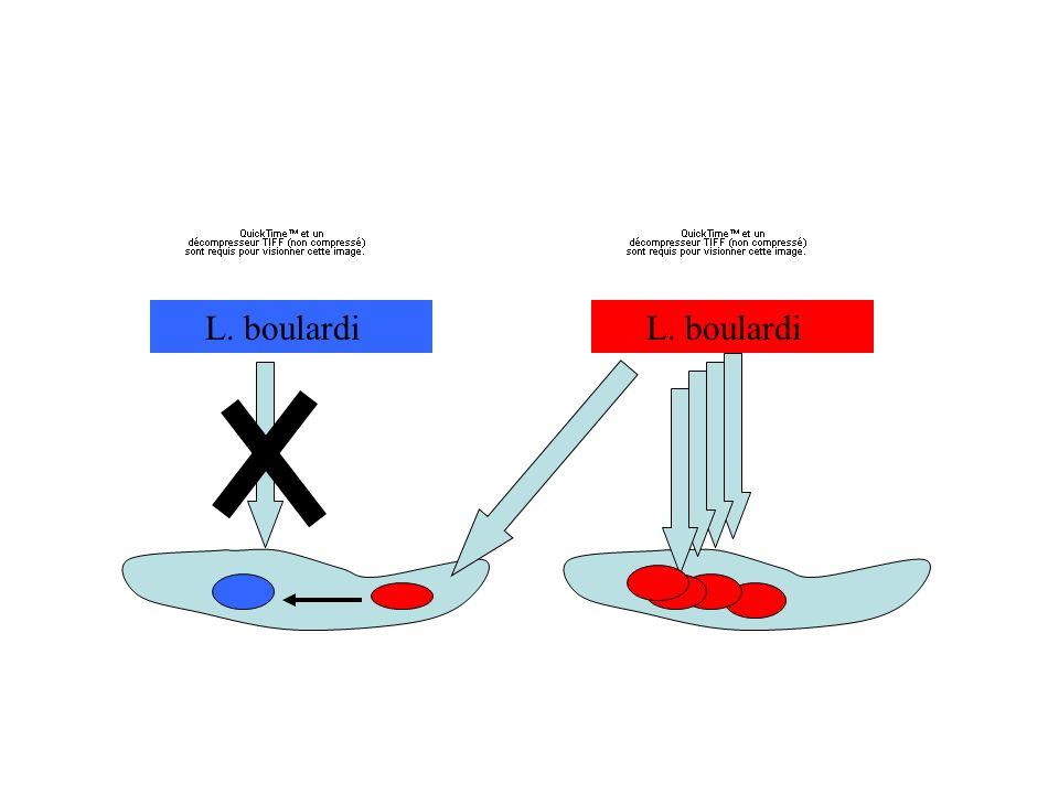 PHENOTYPE (superparasitisme) ETENDU population individu