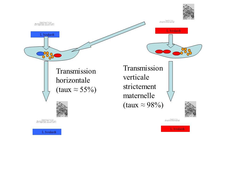 Transmission verticale strictement maternelle (taux 98%) L. boulardi Transmission horizontale (taux 55%)