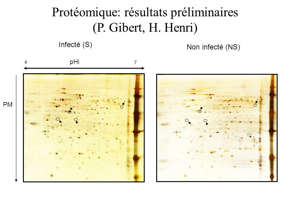 Infecté (S) Non infecté (NS) Protéomique: résultats préliminaires (P. Gibert, H. Henri) pHi 4 7 PM
