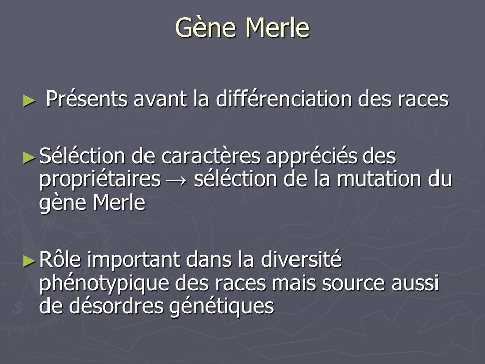 Gène Merle Présents avant la différenciation des races Présents avant la différenciation des races Séléction de caractères appréciés des propriétaires
