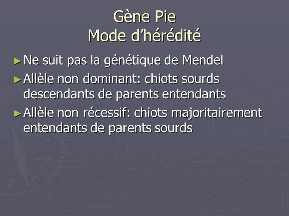 Gène Pie Mode dhérédité Ne suit pas la génétique de Mendel Ne suit pas la génétique de Mendel Allèle non dominant: chiots sourds descendants de parent