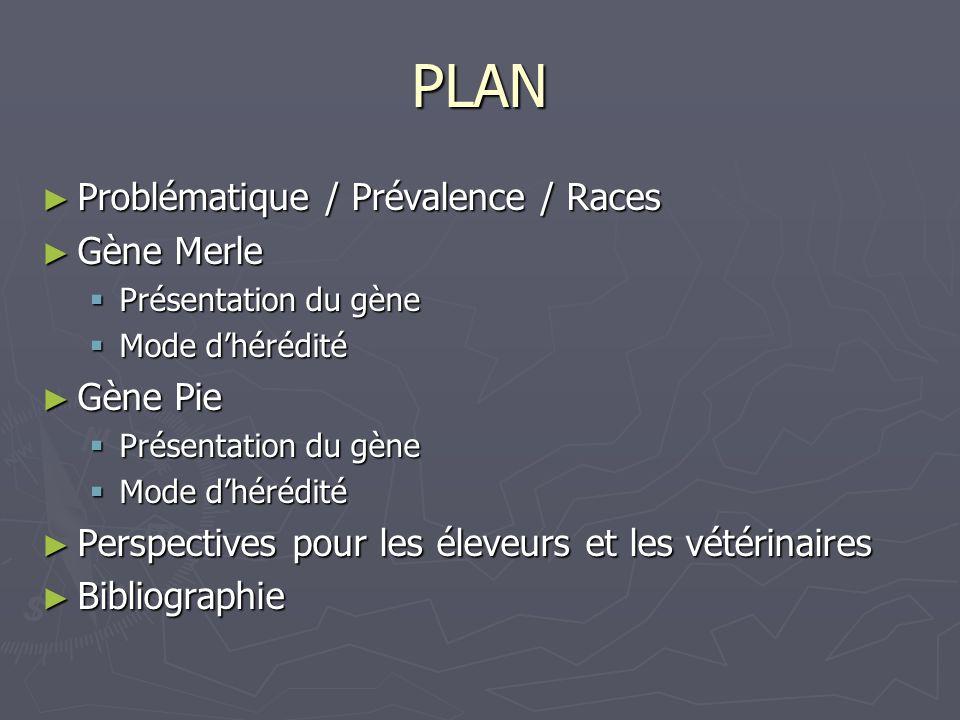 PLAN Problématique / Prévalence / Races Problématique / Prévalence / Races Gène Merle Gène Merle Présentation du gène Présentation du gène Mode dhéréd