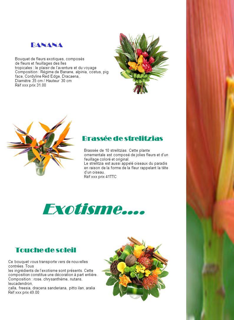 Exotisme…. Brassée de 10 strelitzias. Cette plante ornementale est composé de jolies fleurs et d'un feuillage coloré et original. Le strelitzia est au