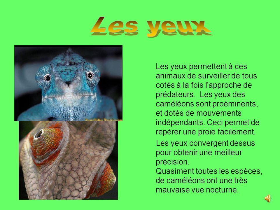 Les caméléons sont des reptiles et des lézards qui présentent de nombreuses particularités anatomiques et biologiques.