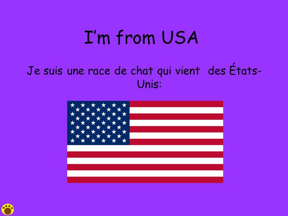 Im from USA Je suis une race de chat qui vient des États- Unis: