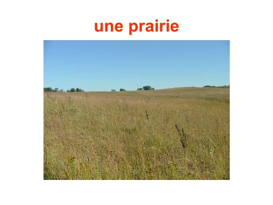 une prairie