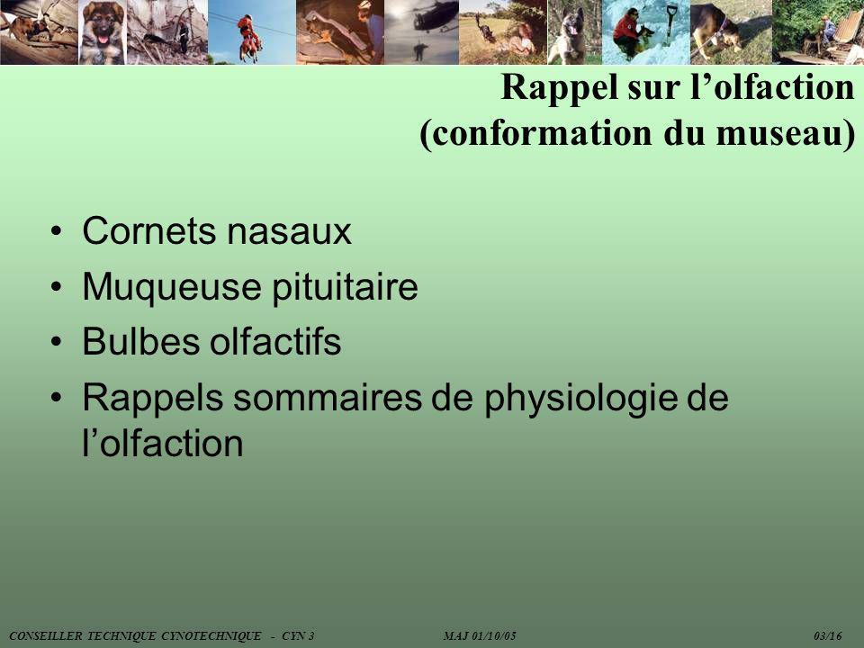 Rappel sur lolfaction (conformation du museau) Cornets nasaux Muqueuse pituitaire Bulbes olfactifs Rappels sommaires de physiologie de lolfaction CONS