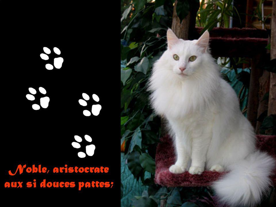J'aime tous les chats: minets, angora