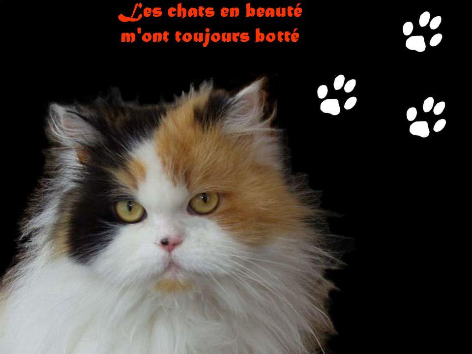 La samba des chats Par Solenna Chanson de G. Salert et J-M Audrain