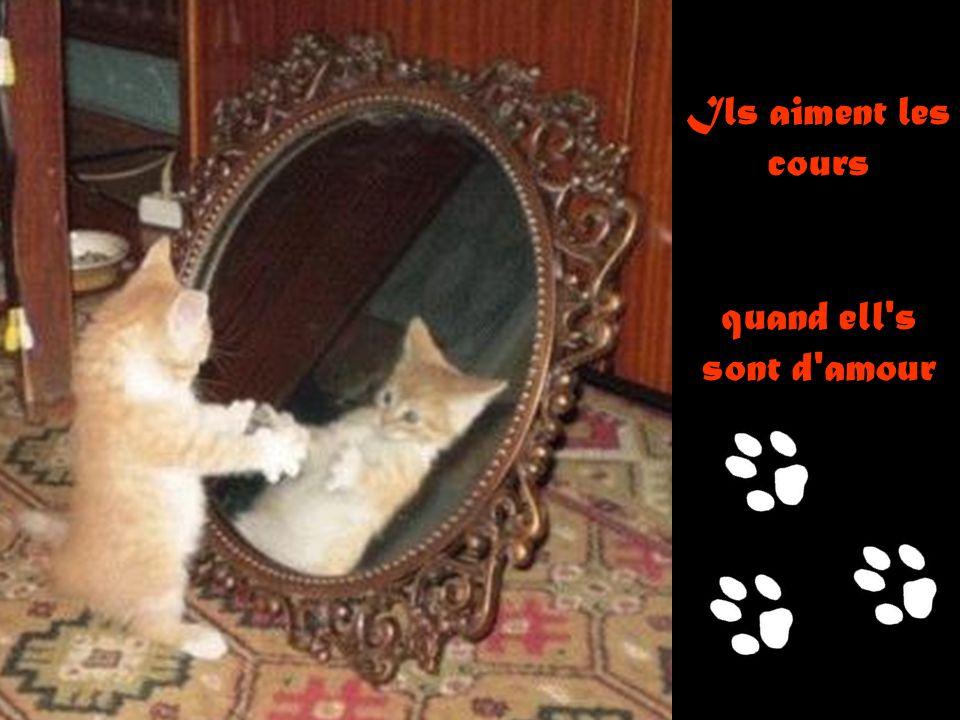 D'un plaisir magique ce chat famélique !