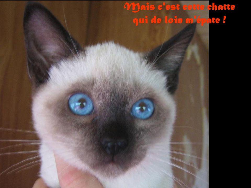 J aime tous les chats: minets, angora