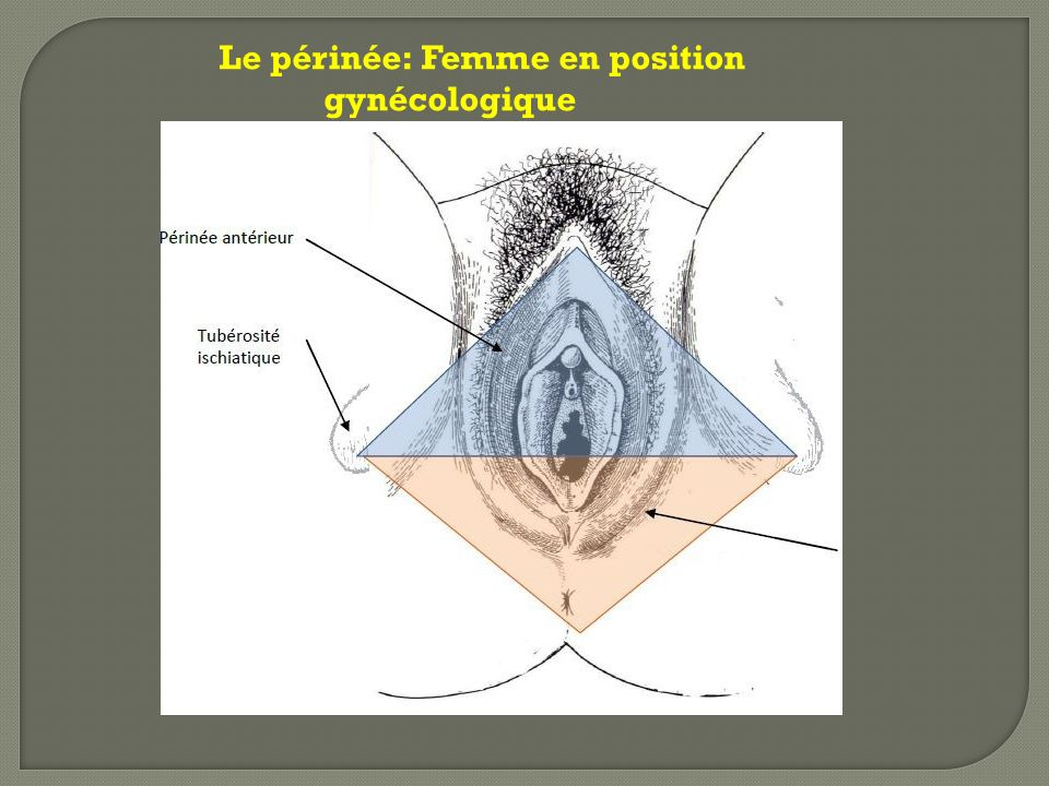 Muscle bulbo-caverneux (muscle bulbo-spongieux) Constant, pair, aplati et symétrique qui recouvre la face externe du bulbe vestibulaire et de la glande de Bartholin.