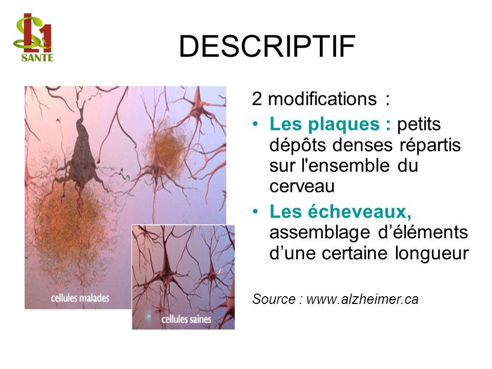 DESCRIPTIF 2 modifications : Les plaques : petits dépôts denses répartis sur l'ensemble du cerveau Les écheveaux, assemblage déléments dune certaine l