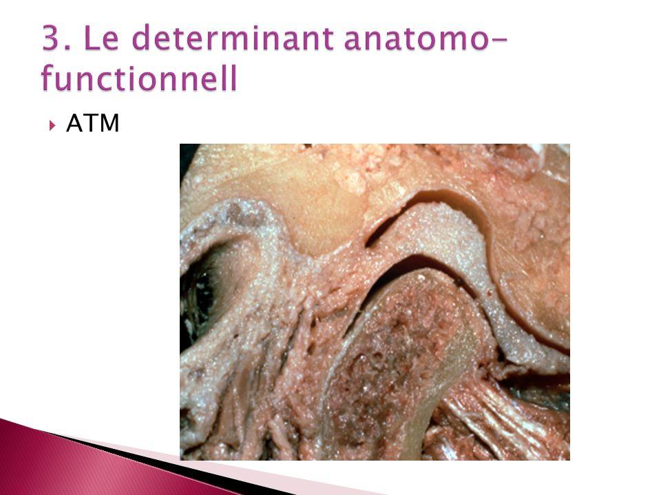 Propulsion - mouvement sagittal postero- ant -7,3-9,1mm -translation articulaire temporale pente condylienne Retropulsion - le recul de la mandibule jusqua lOIM