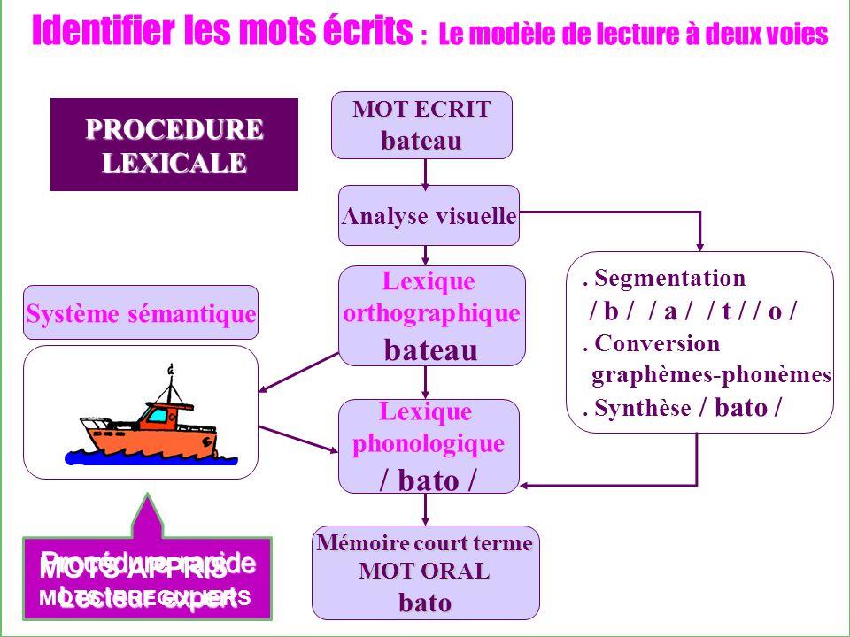 Identifier les mots écrits : Le modèle de lecture à deux voies Analyse visuelle Lexique orthographique bateau Lexique phonologique / bato /. Segmentat