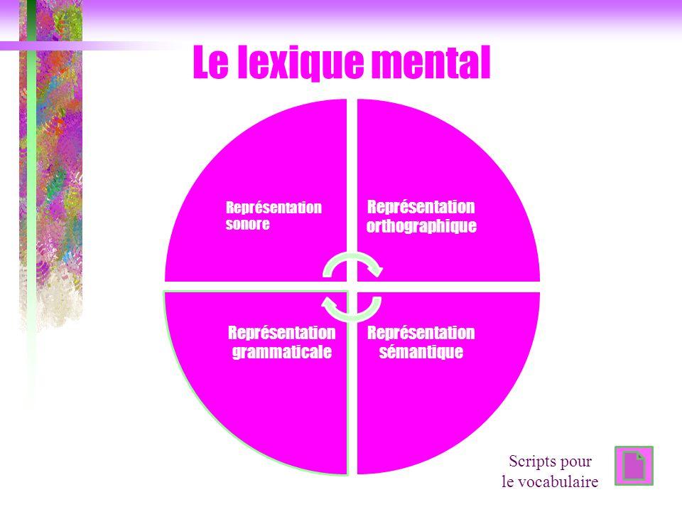 Le lexique mental Représentation sonore Représentation orthographique Représentation sémantique Représentation grammaticale Scripts pour le vocabulair