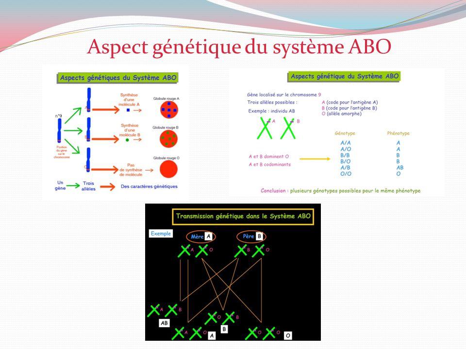 Aspect génétique du système ABO