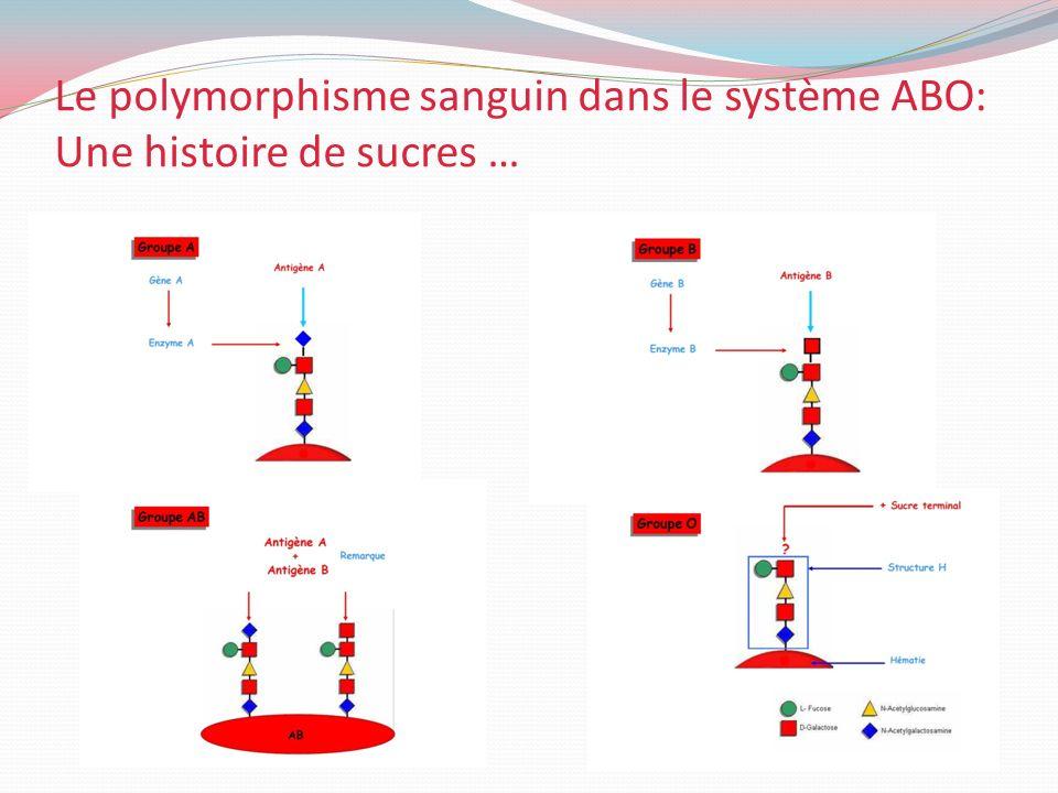 Le polymorphisme sanguin dans le système ABO: Une histoire de sucres …