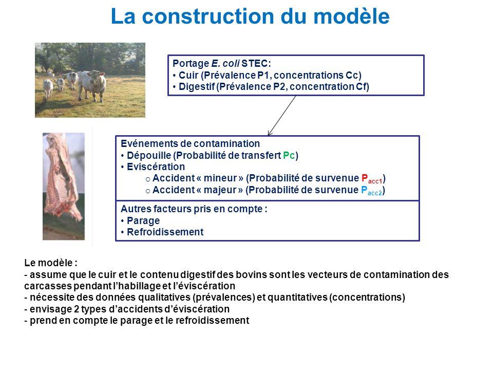 La construction du modèle Le modèle : - assume que le cuir et le contenu digestif des bovins sont les vecteurs de contamination des carcasses pendant
