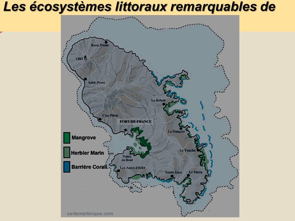 Les problématiques Les mangroves peuvent-elles de par leur situation être contaminée par la chlordécone et ainsi constituer un écosystème relais par lequel sopère le transfert de la contamination terrestre aux communautés halieutiques littorales décrétées comme impropres à la commercialisation et consommation .