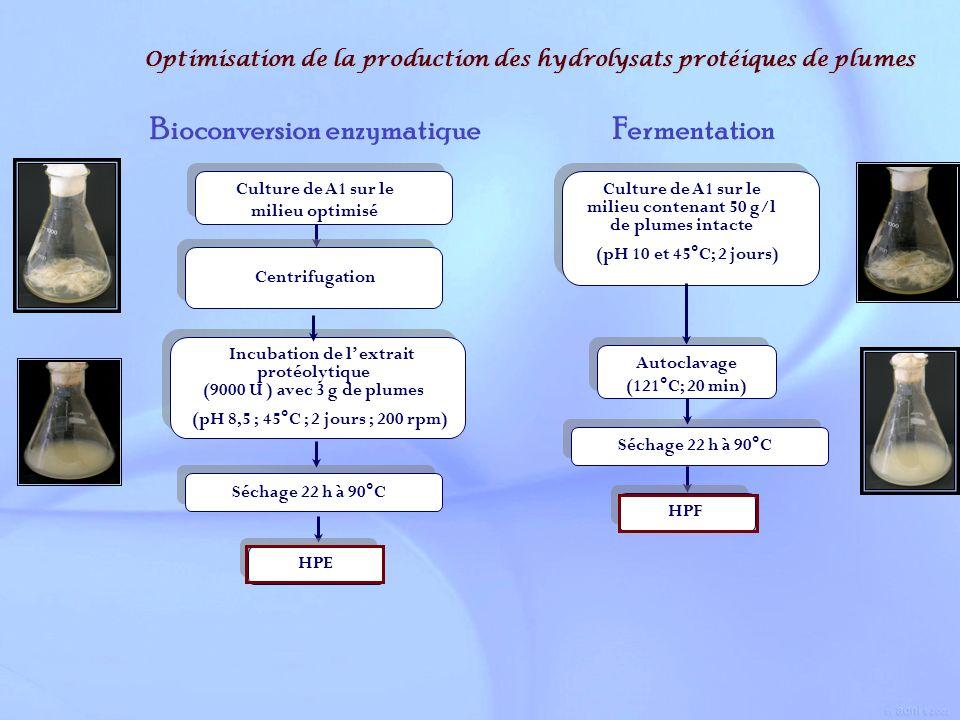 Optimisation de la production des hydrolysats protéiques de plumes Autoclavage (121°C; 20 min) Autoclavage (121°C; 20 min) Culture de A1 sur le milieu
