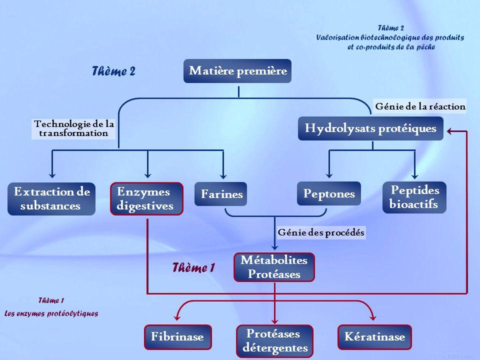 Hydrolysats protéiques Peptones Peptides bioactifs Extraction de substances Enzymes digestives Matière première Farines Métabolites Protéases Technolo