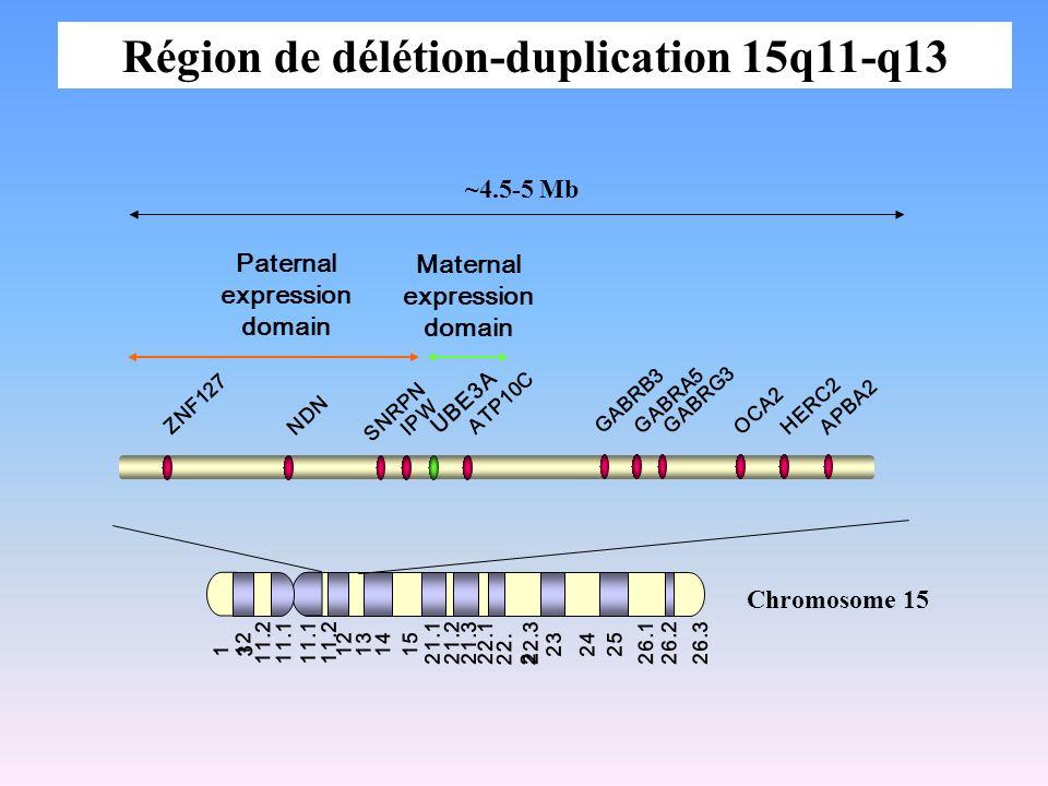 1313 12 11.211.1 1312 11.211.1 1415 21.121.221.322.1 22. 2 22.3 232425 26.126.226.3 Chromosome 15 Maternal expression domain Paternal expression domai