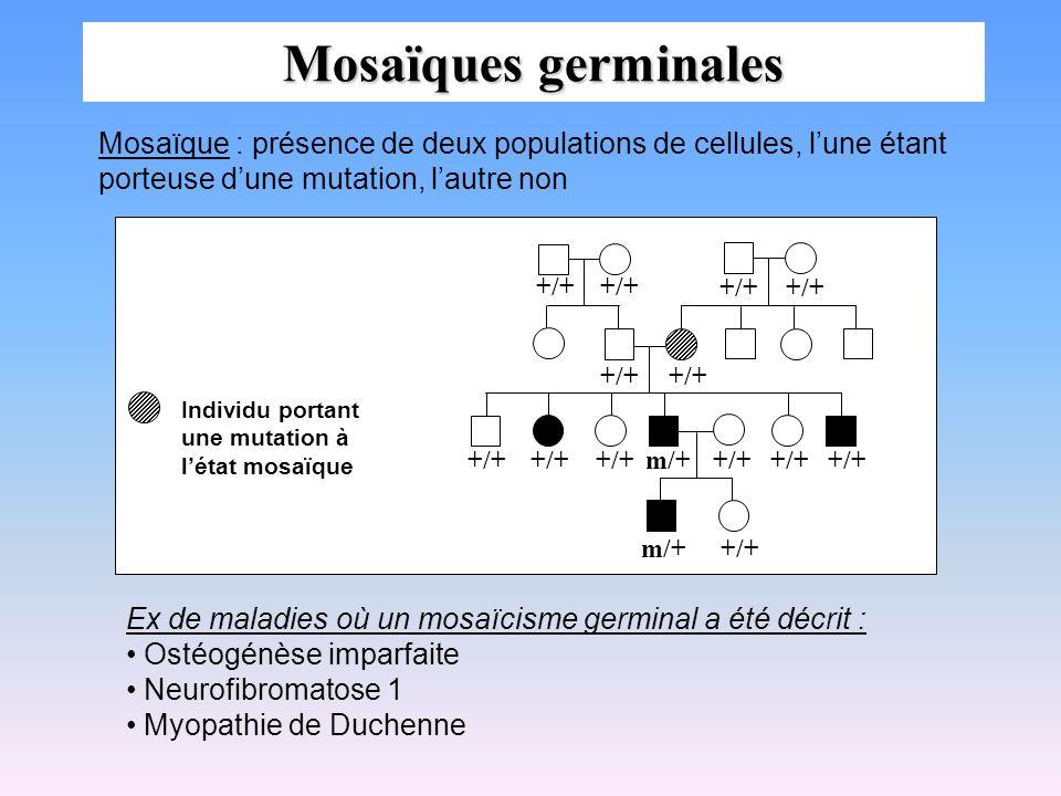 Mosaïques germinales Ex de maladies où un mosaïcisme germinal a été décrit : Ostéogénèse imparfaite Neurofibromatose 1 Myopathie de Duchenne +/++/+ +/