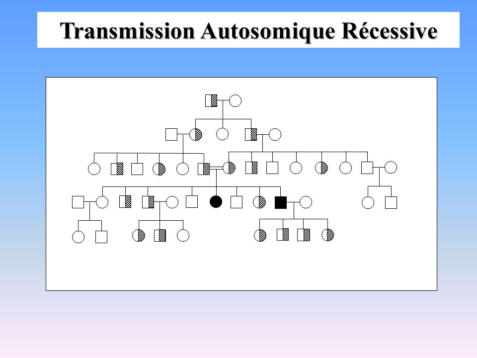 Transmission Autosomique Récessive