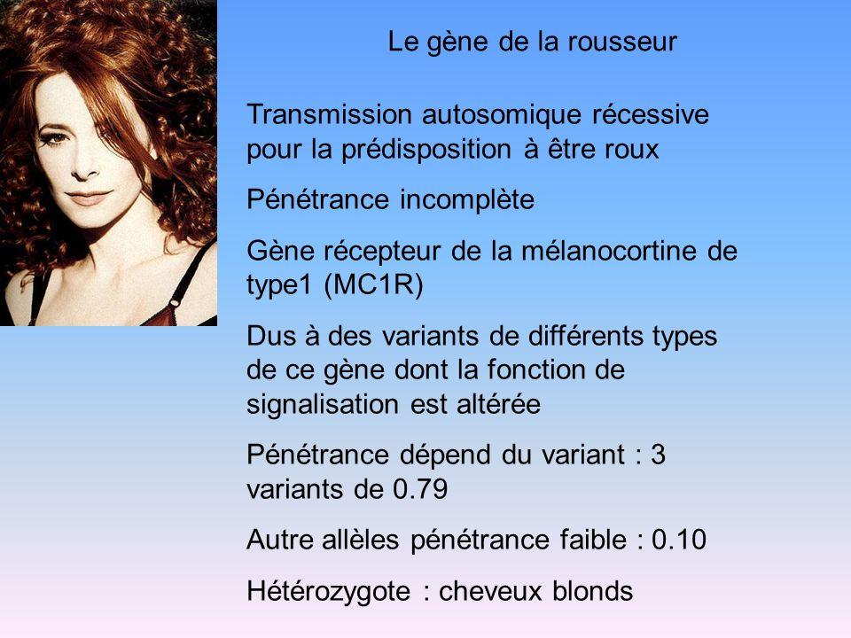 Le gène de la rousseur Transmission autosomique récessive pour la prédisposition à être roux Pénétrance incomplète Gène récepteur de la mélanocortine