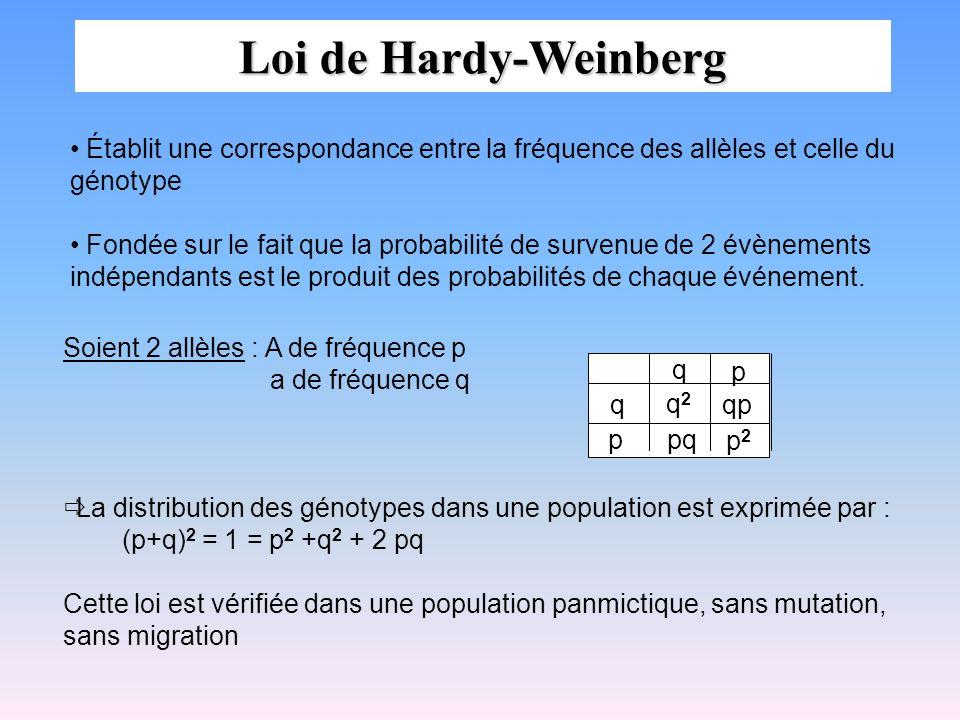 Loi de Hardy-Weinberg Établit une correspondance entre la fréquence des allèles et celle du génotype Fondée sur le fait que la probabilité de survenue