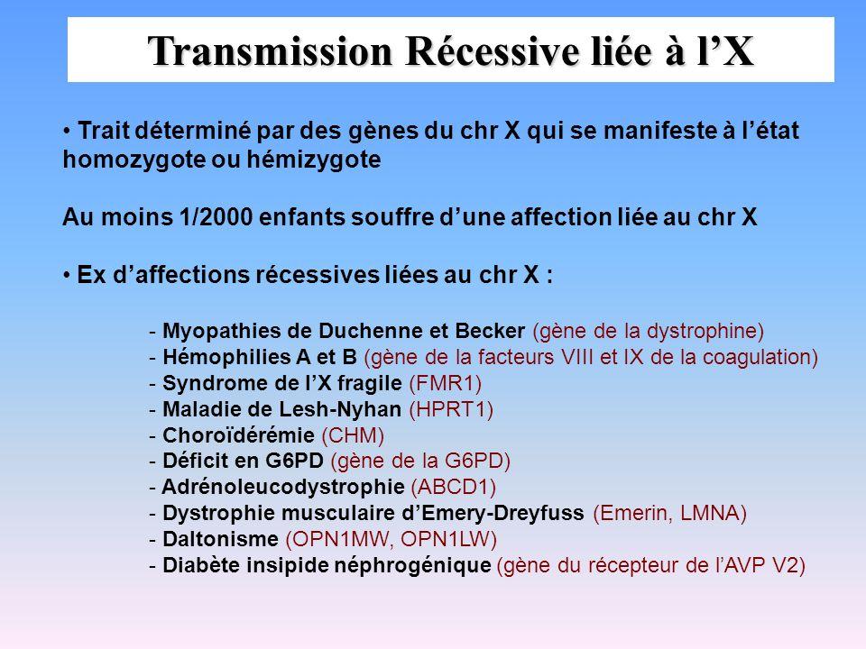Transmission Récessive liée à lX Trait déterminé par des gènes du chr X qui se manifeste à létat homozygote ou hémizygote Au moins 1/2000 enfants souf