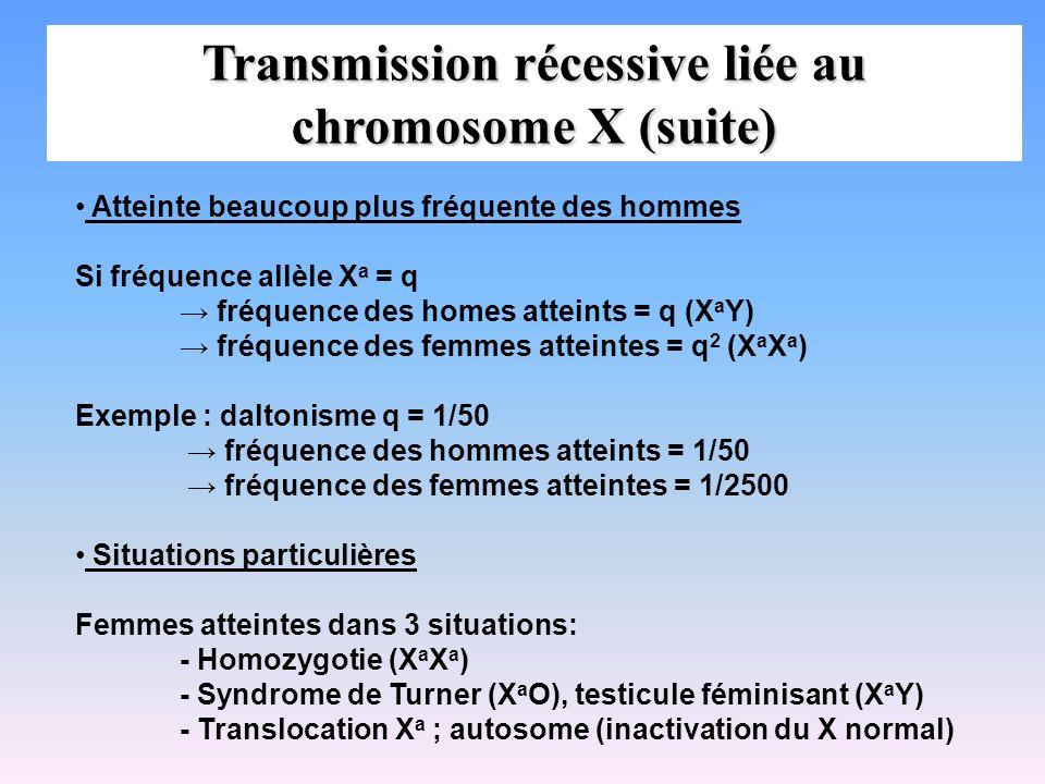 Transmission récessive liée au chromosome X (suite) Atteinte beaucoup plus fréquente des hommes Si fréquence allèle X a = q fréquence des homes attein