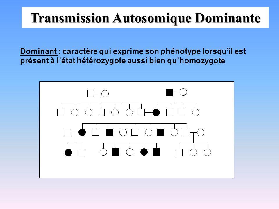 Lois de la transmission AR 1.Lunion de deux hétérozygotes entraîne la naissance dun sujet atteint pour 4 naissances 2.La transmission est horizontale (natteint quune génération) les sujets atteints ont des parents normaux (hétérozygotes) 3.La maladie sexprime dans les deux sexes 4.La proportion dunions consanguines est élevée dans lascendance des sujets atteints (dans ces familles, le gène anormal à létat homozygote chez les atteints provient de lancêtre commun) Aa x Aa Aa AA aa aA a A a A