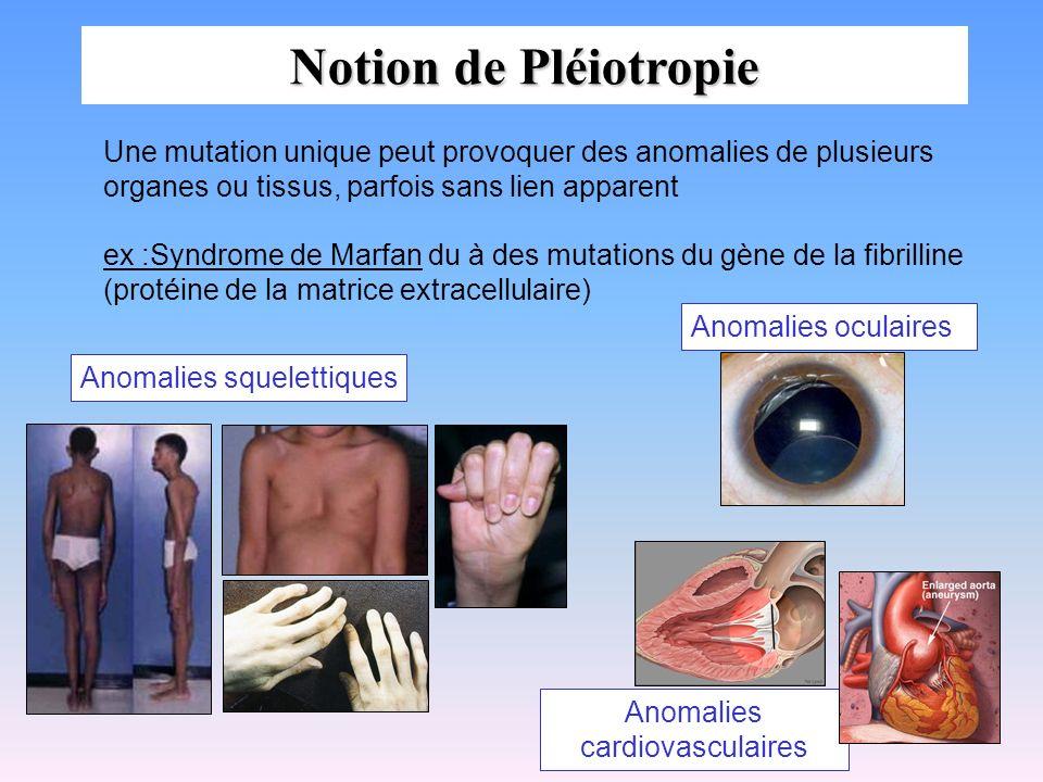 Notion de Pléiotropie Une mutation unique peut provoquer des anomalies de plusieurs organes ou tissus, parfois sans lien apparent ex :Syndrome de Marf