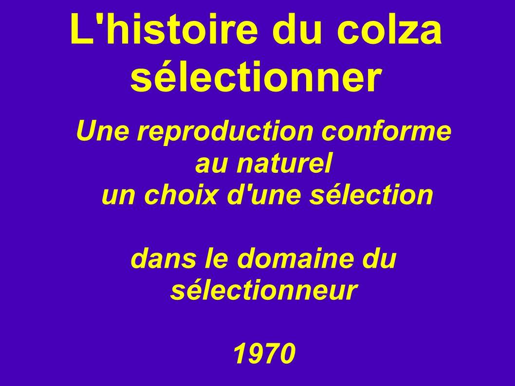 L'histoire du colza sélectionner Une reproduction conforme au naturel un choix d'une sélection dans le domaine du sélectionneur 1970