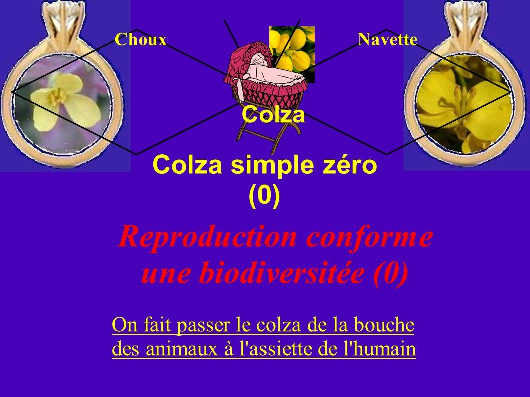 Colza simple zéro (0) Colza Reproduction conforme une biodiversitée (0) On fait passer le colza de la bouche des animaux à l'assiette de l'humain Chou