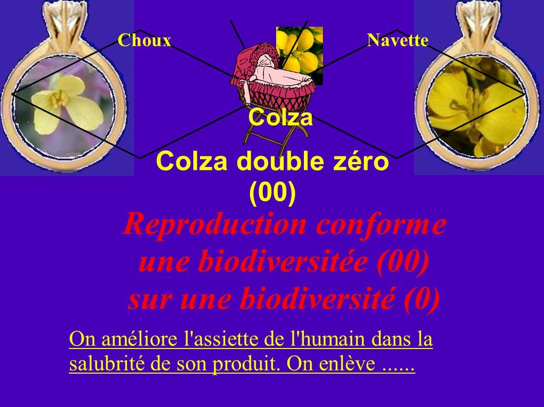 Colza double zéro (00) Colza Reproduction conforme une biodiversitée (00) sur une biodiversité (0) On améliore l'assiette de l'humain dans la salubrit