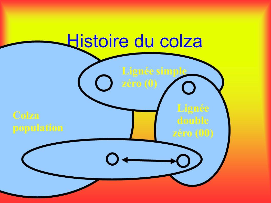 Histoire du colza Colza population Lignée simple zéro (0) Lignée double zéro (00)