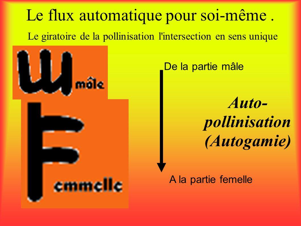 Le flux automatique pour soi-même. Le giratoire de la pollinisation l'intersection en sens unique Auto- pollinisation (Autogamie) De la partie mâle A