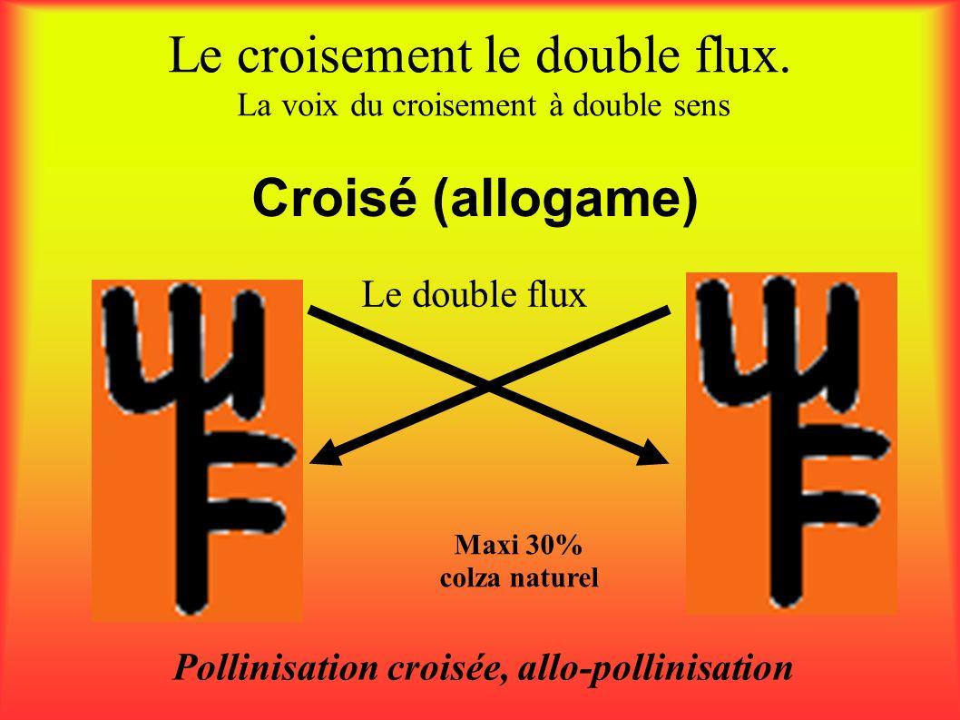 Le croisement le double flux. La voix du croisement à double sens Pollinisation croisée, allo-pollinisation Maxi 30% colza naturel Le double flux Croi
